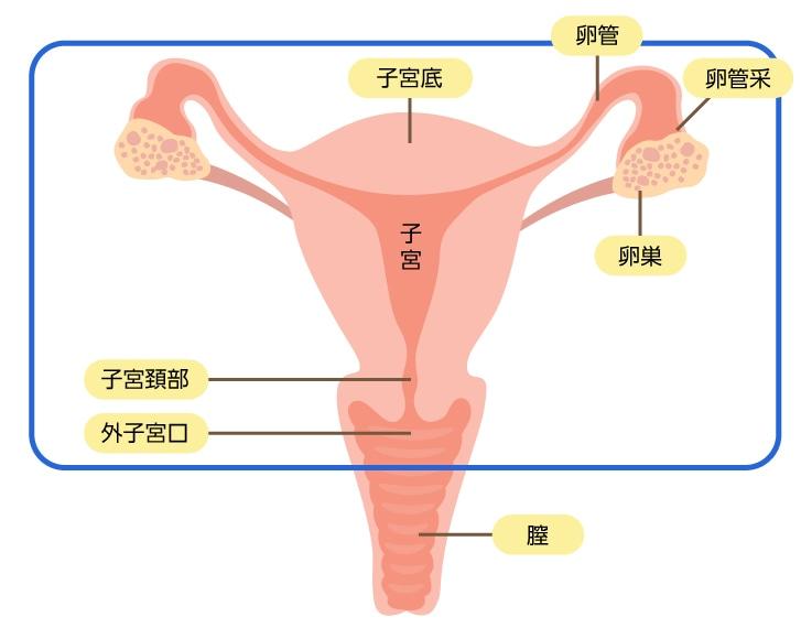 卵巣がんにおける切除範囲の一例